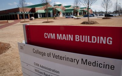 Veterinary Medicine Excels with Inclusion