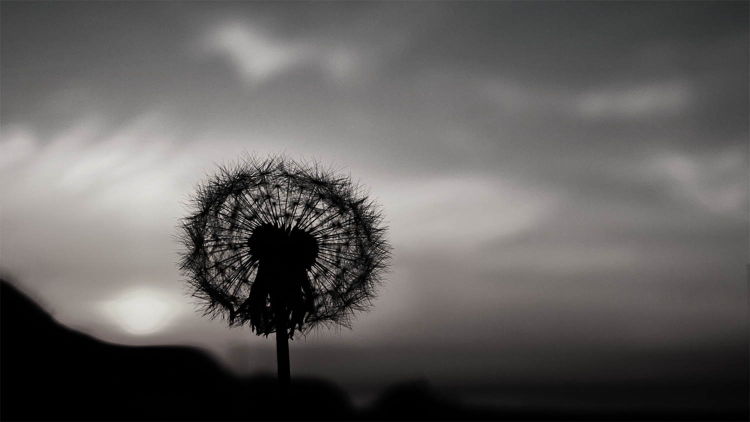 A dandelion silhouetted against a dark sky